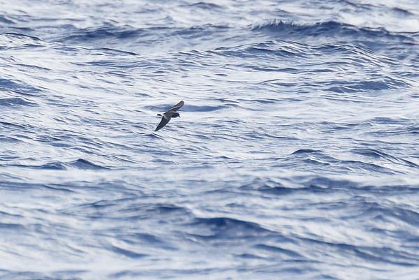 April 09, 2016 8:34:08 AM Britannia Seamount, QLD _MG_4146