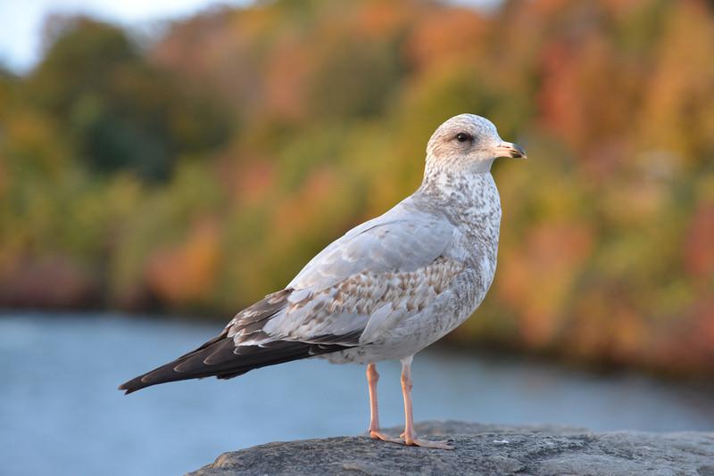Gull Looking Grand
