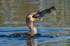 Cormorant-LAWD-12-25-19-SJS-006