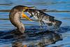 Cormorant-LAWD-12-25-19-SJS-002