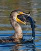 Cormorant-LAWD-12-25-19-SJS-005