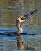 Cormorant-LAWD-12-25-19-SJS-007