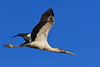 WoodStork-SweetwaterWetlands-12-20-19-SJS-007
