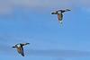 BluewingTeal-LAWD-12-19-20-sjs-004