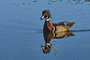 WoodDuck(male)-EmeraldaMarsh-5-1-20-SJS-003