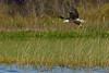 BaldEagle-LakeMarianFL-10-27-19-SJS-032