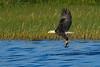 BaldEagle-LakeMarianFL-10-27-19-SJS-036