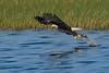BaldEagle-LakeMarianFL-10-27-19-SJS-011
