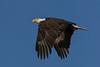 BaldEagle-LAWD-ClayIsland-1-9-19-SJS-008