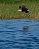 BaldEagle-LakeMarianFL-10-27-19-SJS-033