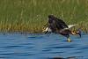 BaldEagle-LakeMarianFL-10-27-19-SJS-010