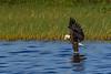 BaldEagle-LakeMarianFL-10-27-19-SJS-035