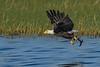 BaldEagle-LakeMarianFL-10-27-19-SJS-012