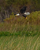 BaldEagle-LakeMarianFL-10-27-19-SJS-031