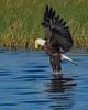 BaldEagle-LakeMarianFL-10-27-19-SJS-034