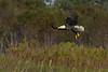 BaldEagle-LakeMarianFL-10-27-19-SJS-009