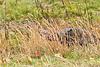 WildTurkeyCataloocheeValleyNC-11-1-18-SJS-019
