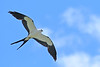 Swallow-tailedKite-BokTowerFL-6-10-18-SJS-004