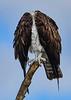 Osprey-LAWD-12-16-18-SJS-002