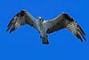 Osprey-LAWD-9-7-18-SJS-002