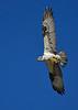 Osprey-EmeraldaMarshFL-4-7-18-SJS-004