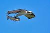 Osprey-LAWD-FL-2-10-17-SJS-18
