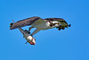 Osprey-LAWD-FL-2-10-17-SJS-17
