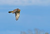 NorthernHarrier-EmeraldaMarshFL-11-18-18-SJS-101
