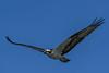 Osprey-LAWD-1-25-19-SJS-004