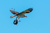 Osprey-LAWD-FL-2-10-17-SJS-13
