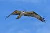 Osprey-LAWD-11-30-18-SJS-006