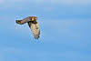 NorthernHarrier-EmeraldaMarshFL-11-18-18-SJS-097