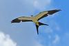 Swallow-TailedKite-LAWD-7-13-18-SJS-006