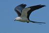 SwallowtailedKite-LAWD-7-24-20-sjs-015