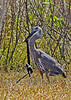 GreatBlueHeron-Watersnake-LAWD-11-25-16-SJS-002