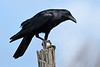 Crow-LAWD-5-25-18-SJS-001