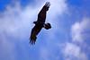 Raven-Arizona-2015-01