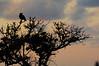 Crow-Sunset-07-01