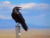 Raven-AZ-2015-001