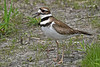 Killdeer-HowardMarshOH-5-8-18-SJS-002
