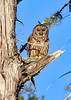 BarredOwl-EmeraldaMarsh-1-8-20-SJS-009