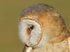 BarnOwl-AvianReconditioningCenterFL-11-11-17-SJS-005