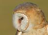 BarnOwl-AvianReconditioningCenterFL-11-11-17-SJS-005