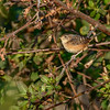 SedgeWren-PineMeadows-1-26-20-SJS-003