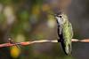 AnnasHummingbird-AZ-2015-010