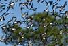 TreeSwallow-PineMeadowsCA-12-9-20-sjs-003