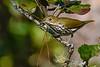 Ovenbird-OcalaNF-10-12-20-sjs-05