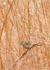 PalmWarbler-OaklandNP-12-4-20-sjs-001