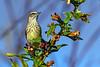 PalmWarbler-EmeraldaMarsh-11-7-19-SJS-001