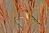 PalmWarbler-LAWD-FL-1-12-17-SJS-02
